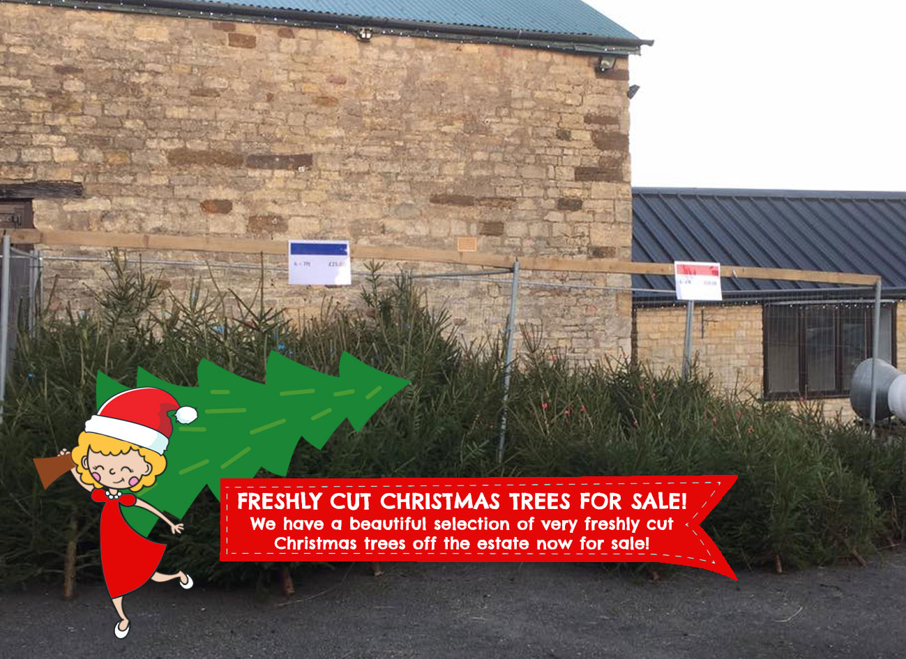 Freshly Cut Christmas Trees From Just £15